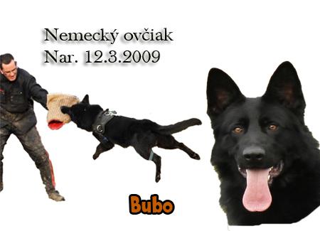 http://www.vycvik.sk/nasi-psi/index/bubo.jpg