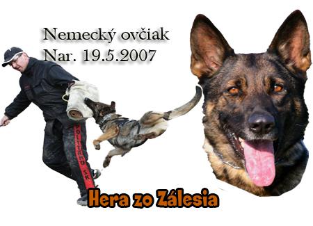 http://www.vycvik.sk/nasi-psi/index/hera.jpg
