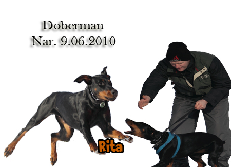 http://www.vycvik.sk/nasi-psi/index/rita.jpg